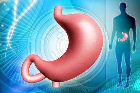 digital illustration of human stomach in digital background    illustration