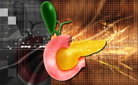 glucagon: Digital illustration of pancreas in colour background