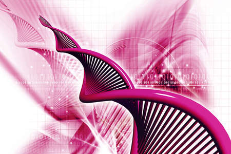 dna strand: Digital illustration of a dna in white background