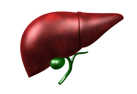 Digital illustration of liver in colour background illustration