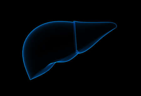 Digital illustration of liver in colour background Stock Illustration - 15962476