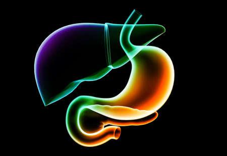 Digital illustration of stomach in colour background Stock Illustration - 15962483