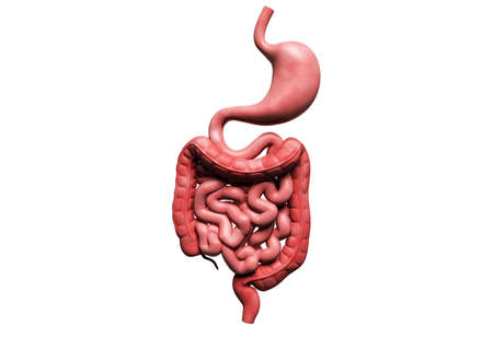 Digital illustration of human digestive system in colour background Stock Illustration - 15962479