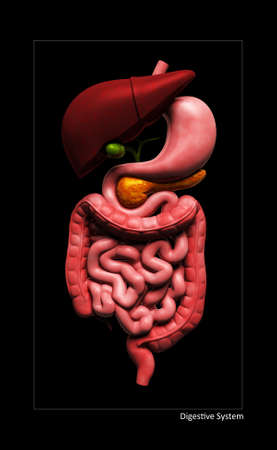 Digital illustration of human digestive system in colour background Stock Illustration - 15962729