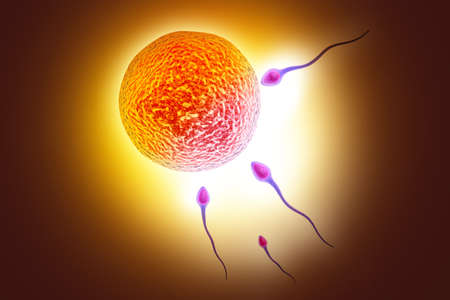digital illustration of sperm and ovule in colour background Stock Photo