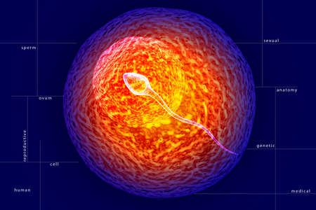 ovum: Digital illustration of males Semen and ovum in colour
