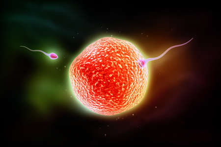 Digital illustration of sperm and ovum in colour illustration