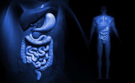 tract: Digital illustration of human digestive system in colour background