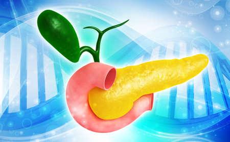 glucagon: Digital illustration of  pancreas in colour  background