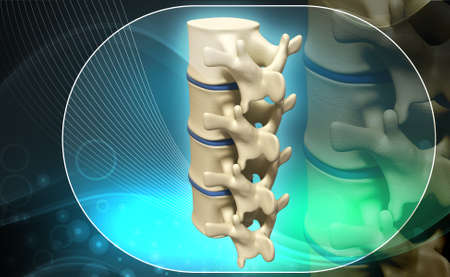 coccyx pain: Digital illustration of human spine in colour background