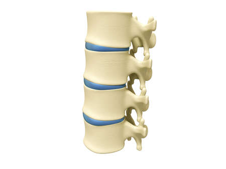 backbone in white background photo