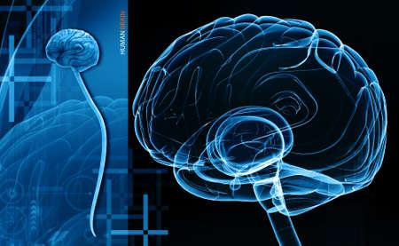 cerebra: Digital illustration of human brain in colour background