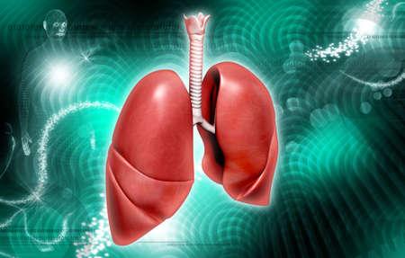 pulmon sano: Ilustraci?igital de pulmones humanos en el color de fondo Foto de archivo