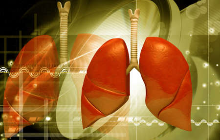 pulmones: digital illustration of human lungs in colour background