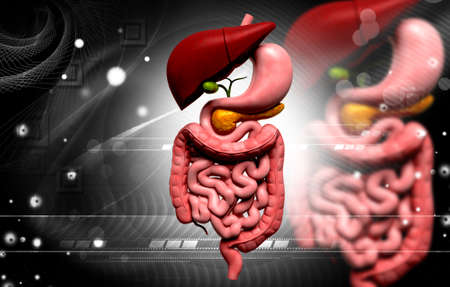 Digital illustration of human digestive system in colour background Stock Illustration - 21199934