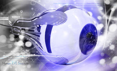 macular: digital illustration of a human eye in white background