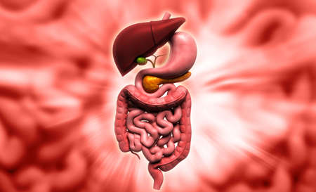 Digital illustration of human digestive system in colour background Stock Illustration - 21199981