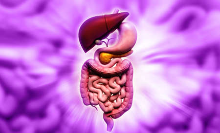 Digital illustration of human digestive system in colour background Stock Illustration - 21199982