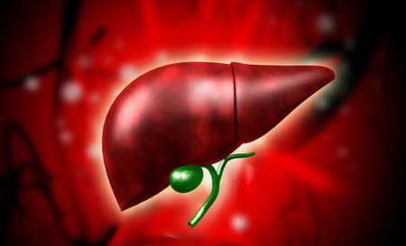Digital illustration of liver in colour background