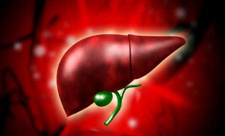 Digitale afbeelding van de lever in kleur achtergrond