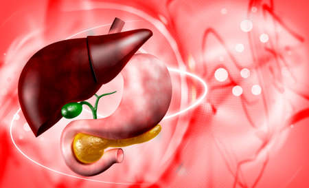 human liver and stomach in digital background photo