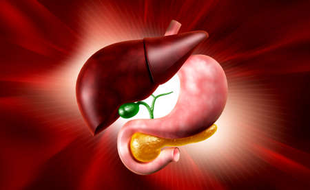 Digital illustration of stomach and liver in colour background Stock Photo