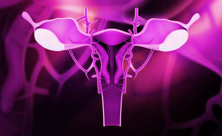 Digital illustration of female reproductive system in colour background