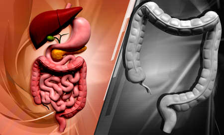 Digital illustration of human digestive system in colour background Stock Illustration - 21788148