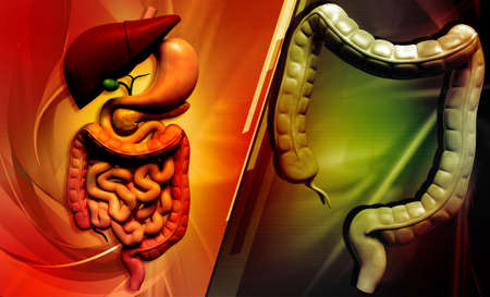 Digital illustration of human digestive system in colour background Stock Illustration - 21788149