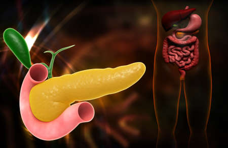 Digital illustration of pancreas in colour background illustration