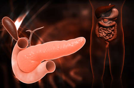 pancreas: Digital illustration of pancreas in colour background