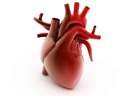 digital illustration of a human heart Stock Photo