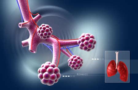 digital illustration of Alveoli in digital background