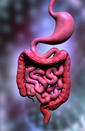 Digital illustration of human digestive system in colour background Stock Illustration - 21854482