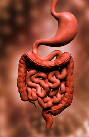 complex system: Digital illustration of human digestive system in colour background