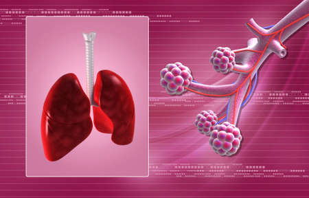 digital illustration of Alveoli in digital background illustration