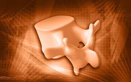 Digital illustration of human spine in colour background illustration