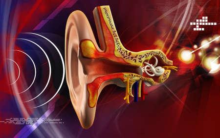 Anatomía del oído en el color de fondo Foto de archivo - 22368351