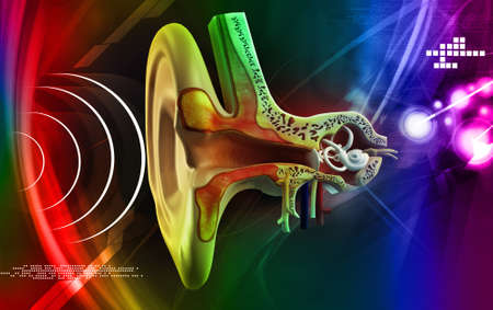 Anatomie de l'oreille dans la couleur de fond