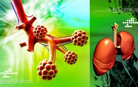 alveolos: Ilustraci�n digital de alv�olos y pulmones humanos en el fondo digital Foto de archivo