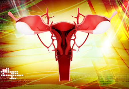 Digital illustration of female reproductive system in colour illustration