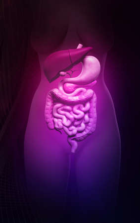 Digital illustration of human digestive system in colour background Stock Illustration - 22887393
