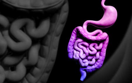Digital illustration of human digestive system in colour background Stock Illustration - 22887397