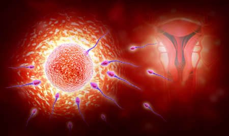 procreation: Digital illustration of sperm and egg in colour background Stock Photo