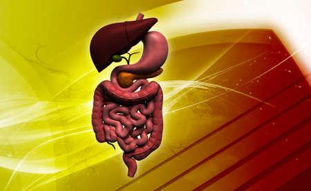 Digital illustration of human digestive system in colour background Stock Illustration - 23339545