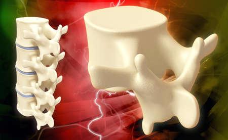 Digital illustration of human spine in colour background