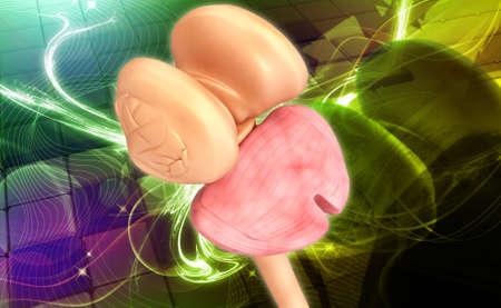 thalamus: T�lamo de la m�dula espinal y el cerebelo en color de fondo Foto de archivo