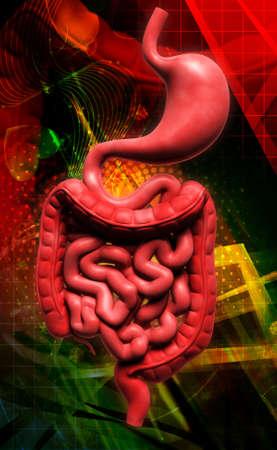 Digital illustration of human digestive system in coloured background illustration