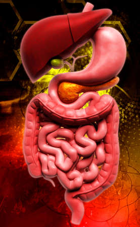 Digital illustration of human digestive system in coloured background illustration
