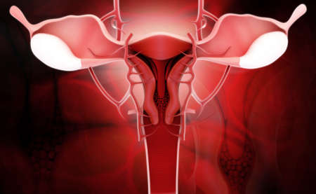Digital illustration of female reproductive system in color  illustration